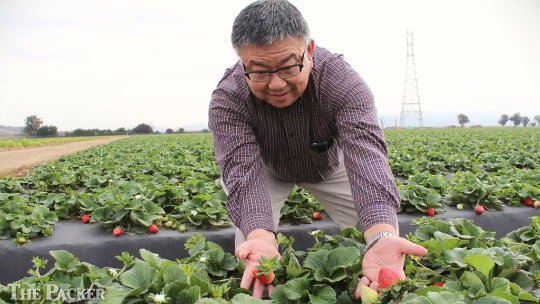 Good weather kicks off Southern California strawberry season