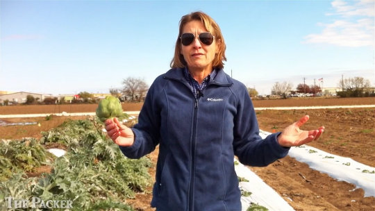 Texas artichokes fill locally grown niche