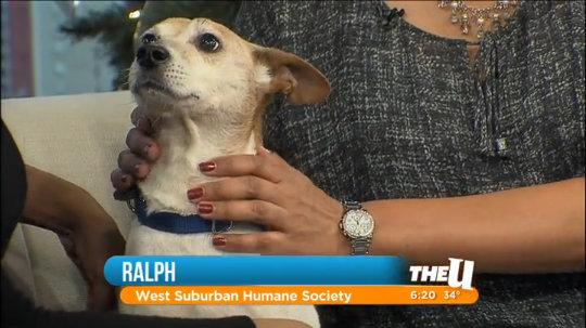 Rescue Dog: Meet Ralph