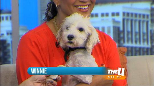 Rescue Dog: Meet Winnie