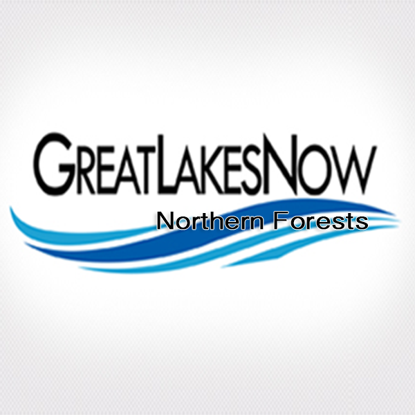 Panel Discussions - Great Lakes Now Connect: Northern Forests