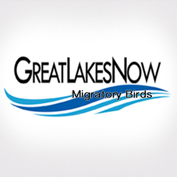 Interviews - Great Lakes Now Connect: Migratory Birds